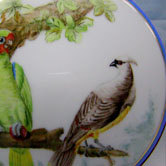 The Parakeet, the Waxwing and the green Toucan