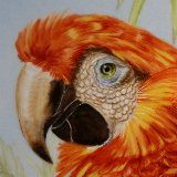 Red Macaw on a small plaque
